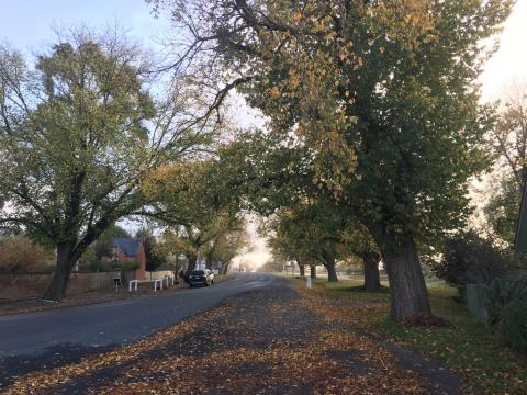 Autumn in Maldon